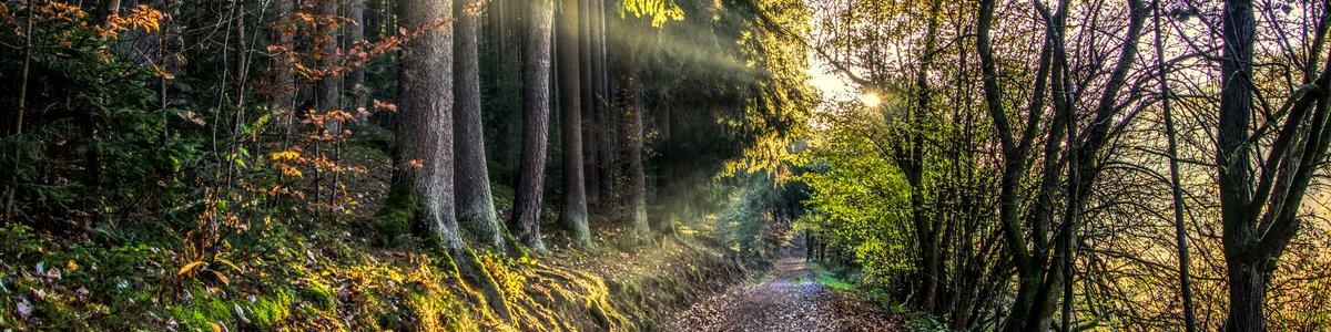Waldlichtung - Kirchner Seminare