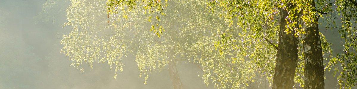 Sonnenstrahlen im Wald - Kirchner Seminare