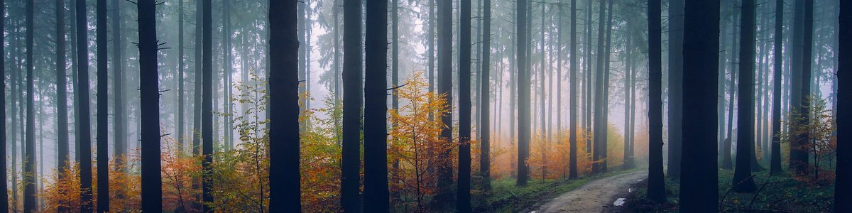 Nebel im Wald - Kirchner Seminare